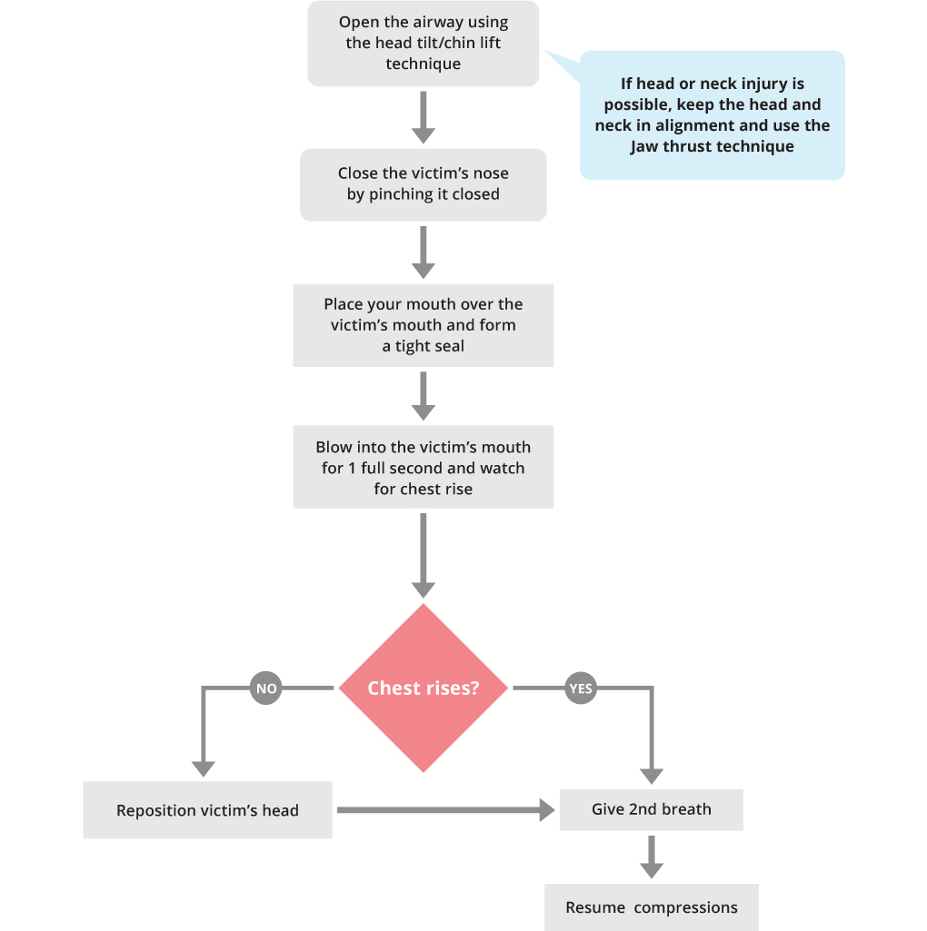 BLS Rescue Breathing Adult or Child Algorithm
